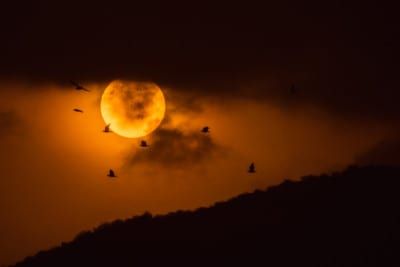 Sunrise with a flock of birds, Pushkar, India