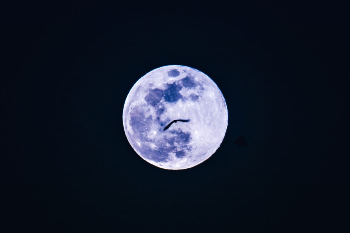 Full moon with a bat over Ambrai Ghat